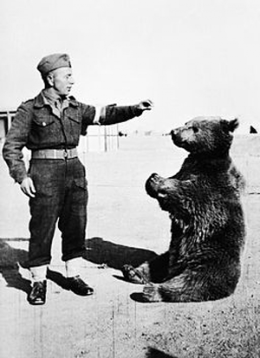 The amazing story of Cpl. Voytek, the soldier bear