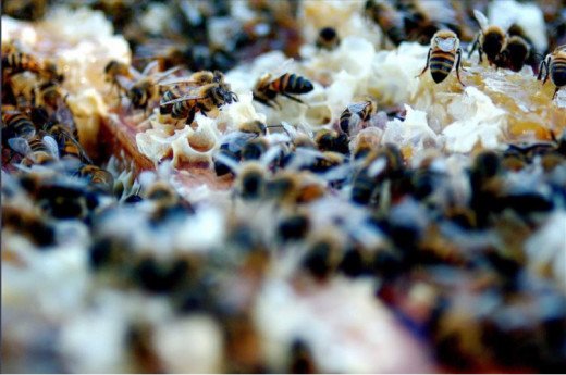 Feds won't ban pesticides deadly to bees, bugs, and their ecosystems